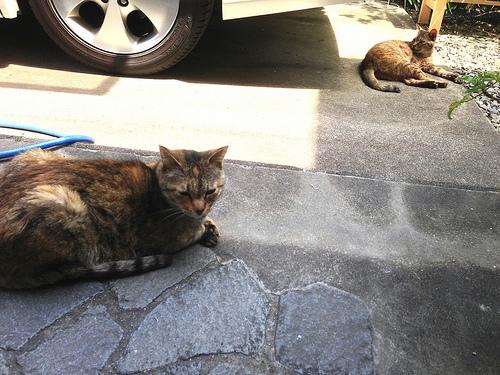 猫2013/04/29 アルとメリー