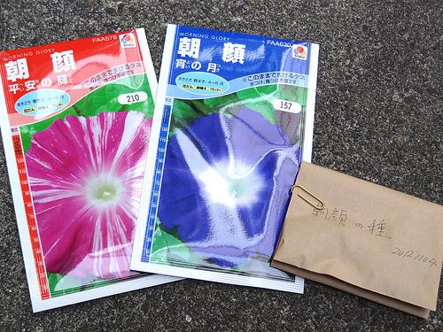 アサガオの種植(2013/06/05)